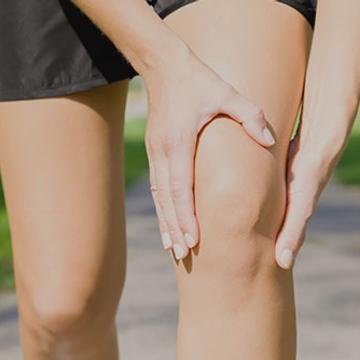 Anatomie : le genou