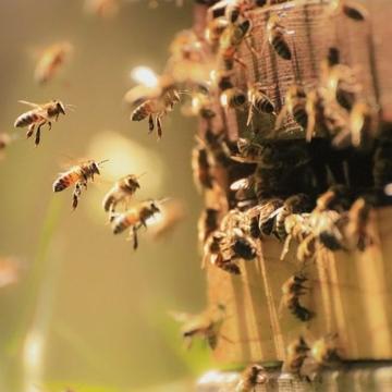 Ruche, abeilles et produits apicoles